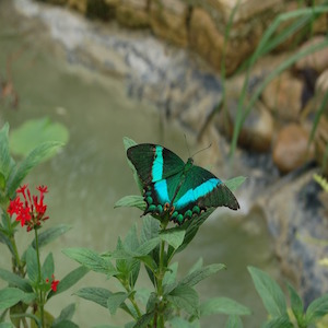 Butterfly farm - bed and breakfast - luberon - vaucluse - la bastide des dreamses