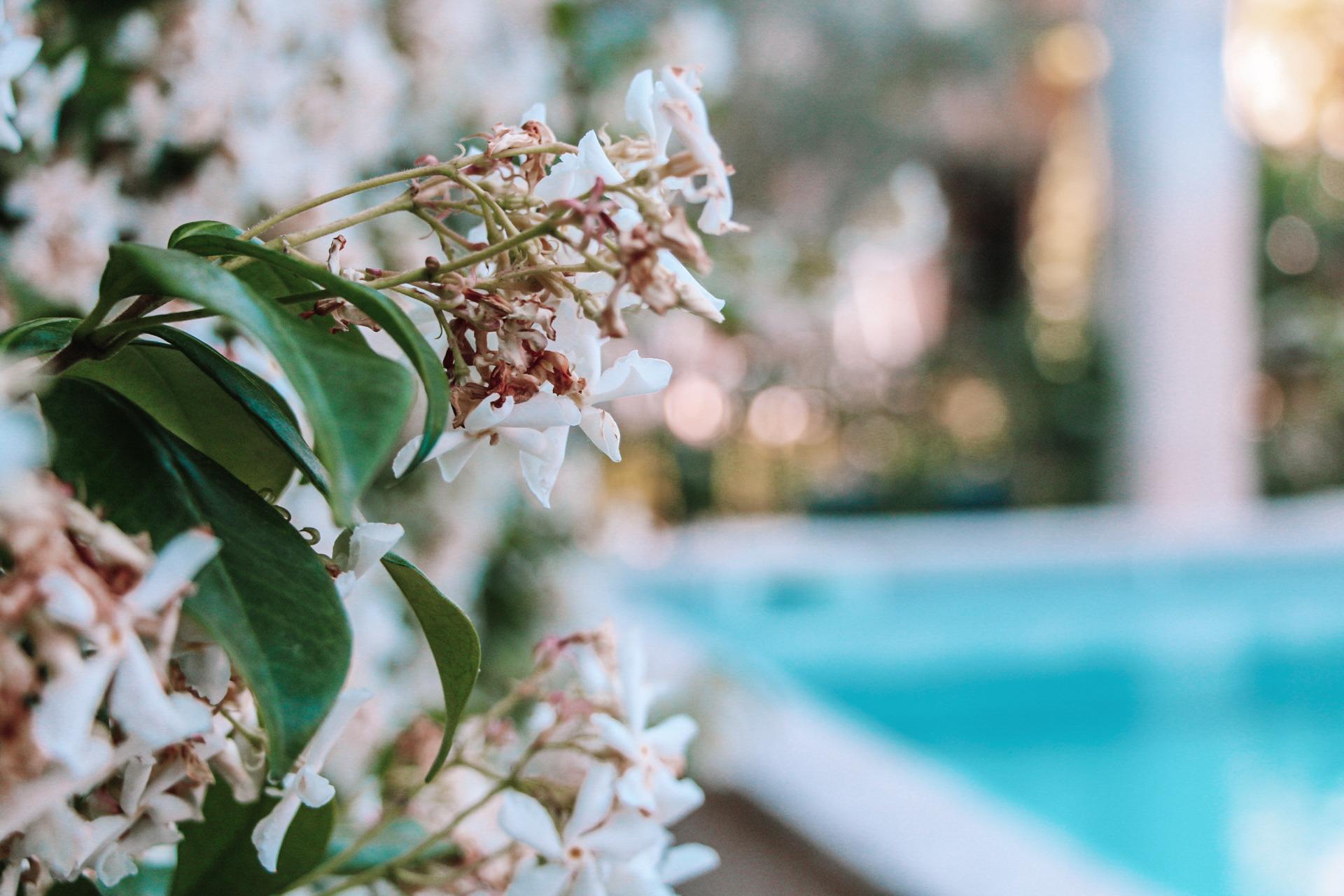 la bastide des songes - chambre hotes - luberon - provence - gordes - roussillon - isle sur sorgue - piscine
